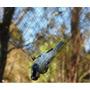 Rede De Neblina / Japonesa, Armadilha Para Morcego Fio Nylon