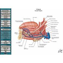 Atlas Interativo De Anatomia Humana Netter 3.0 Medicina