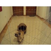 Cercadinho Ideal Para Cachorros E Animais De Medio Porte