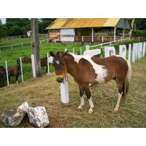 Cavalo Mini Ponei