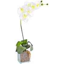 Arranjo Floral - Orquídea Branca Divina