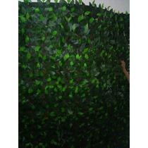 Muro Inglês De Folhagens De Ficus 3,00 Por 2,00 Altura