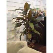 Planta Artificial/àrvore Dracena Bordô 1,10mt De Altura