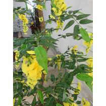 Planta Artificial-arvore Brinco Amarelo 1,60mt Altura