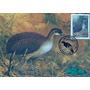 Brasil Máximo Postal Pássaros Aves 1995
