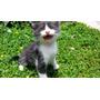 Gatos Para Adoção, Cabo Frio-rj