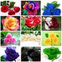 36 Sementes Rosas Raras Exóticas - 12 Cores + Frete Grátis