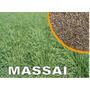 Capim Massai 2 Kg Sementes 72%vc Frete Gratis