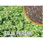 Soja Perene 3kg Sementes Leguminosa Proteína
