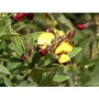 Leguminosas Estilosantes Crotalaria Nabo Guandu Mucuna Todas