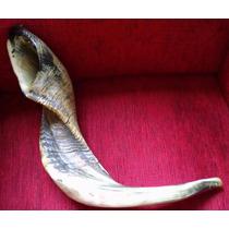 Shofar De Carneiro Rústico 65 Cm