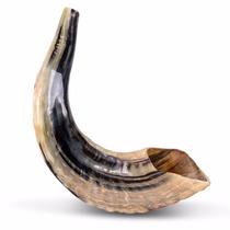 Shofar De Carneiro Polido 40 A 44 Cm + Capa