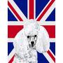 Branco Poodle Toy Com O Inglês Union Jack Bandeira Britâni