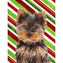 Candy Cane Feriado Do Natal Do Filhote De Cachorro Yorkie /