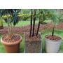 Argila Expandida Para Jardim E Construção Saco 50 Litros Rj