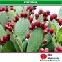 Emagrecedor Natural - 10 Ervas Em 180 Cápsulas - 25