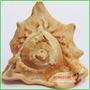 Antiga Concha Do Mar Importada Decoração Objetos Antigos
