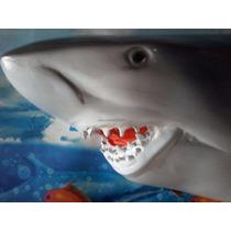 Tubarão Em Fibra De Vidro Para Decoração De Ambientes.