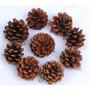 Pinha Natural Decorativa Decoração Artesanato Natal - 10 Und