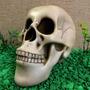 Cranio Caveira - Resina Mercadolider 100% Positivo