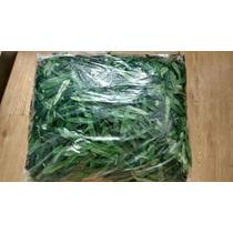 Folha Para Bambu Bambu Mosso Artificial Pacote 900 Gramas