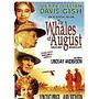 Dvd Filme - Baleias De Agosto