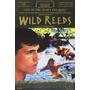 Dvd Wild Reeds (filme Temática Gay) Gls Lgbt