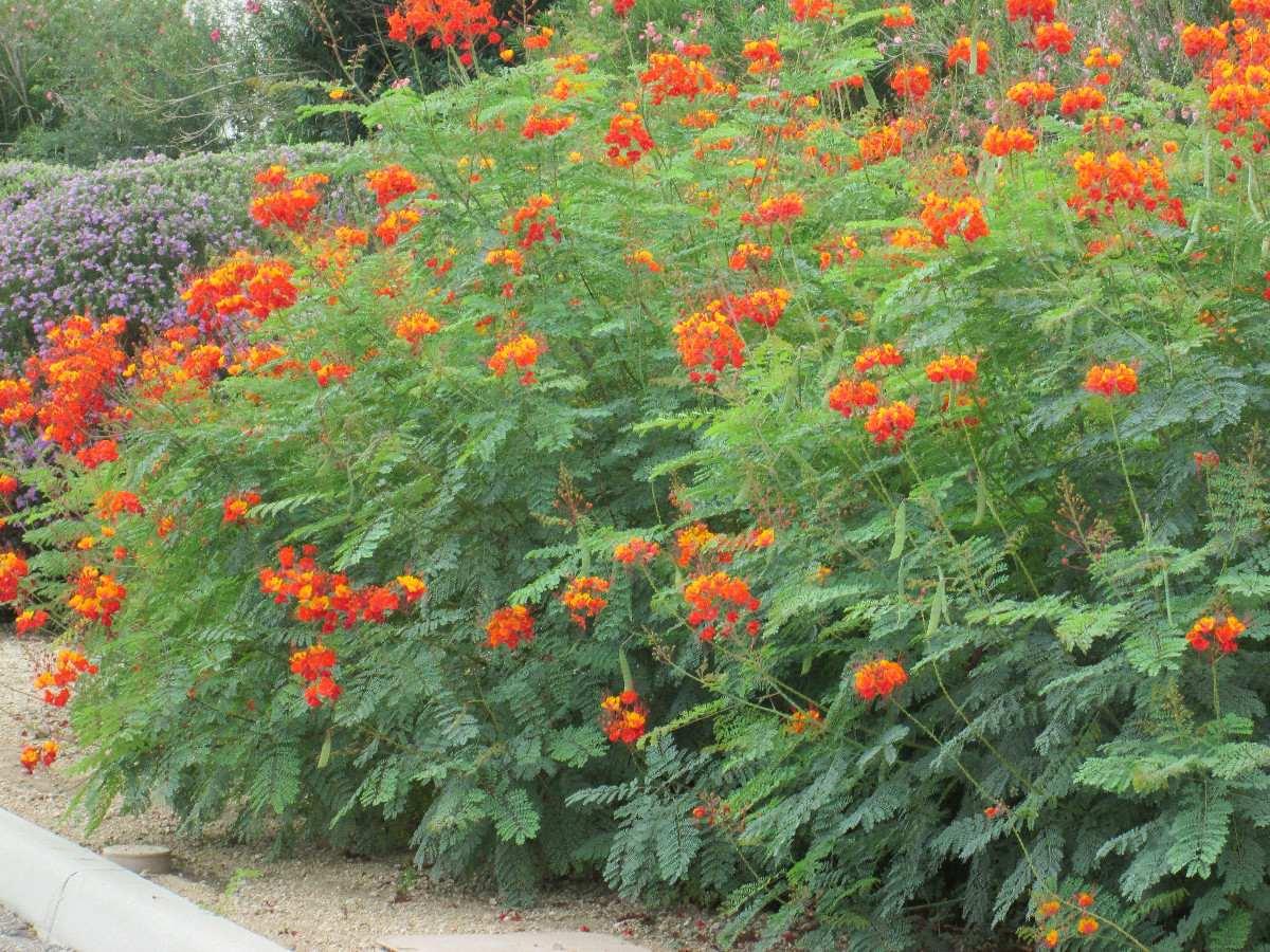 cerca para jardim mercadolivre: Red – Cerca Viva Sementes Para Muda Flor – R$ 9,99 no MercadoLivre