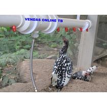 Bebedouros Aves Codorna Ovos Pássaros Chocadeiras