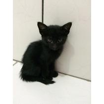 Filhote De Gato Para Doação Femea Em Guarulhos