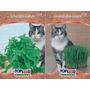 Sementes Grama E Erva Dos Gatos - Kit 3 De Cada #pbn6