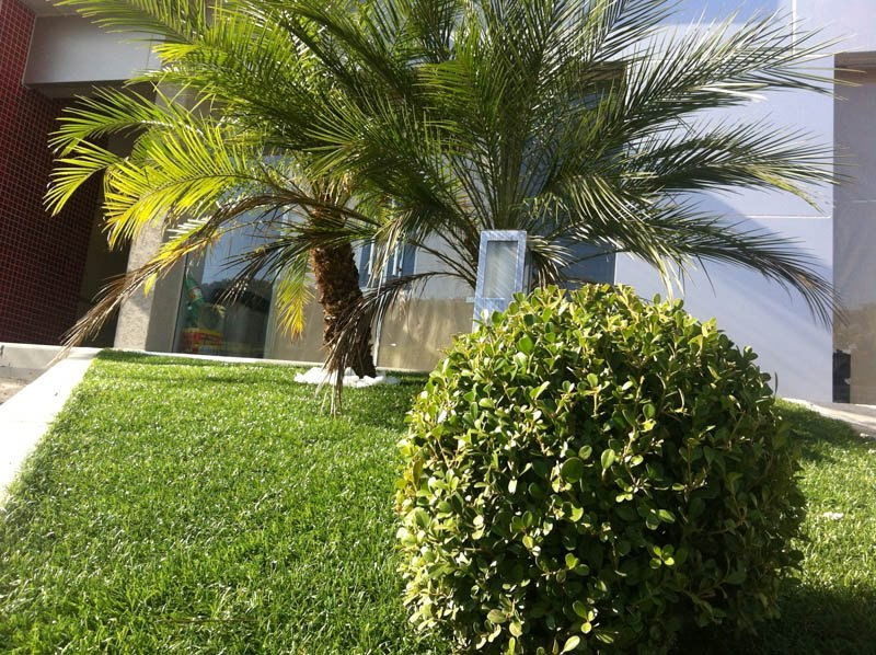 grama sintetica para jardim em curitiba:Fotos De Grama Sintética Fortaleza Fortaleza Pictures to pin on