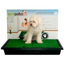 Sanitario Canino Cães Grama Ecopatio + Educador Pipi Pode