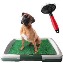 Sanitário Canino Grama P/ Cães + Escova Para Pelos Cachorro