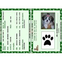 Rg - Carteira De Identidade Para Cães, Gatos E Outros