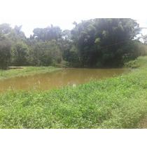 Ibiuna Sitio Com 55.000ms Para Plantio R$ 250 Mil - Célia