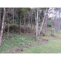 Terreno-juquitiba-20.000 Mts2-bosque-só R$.60.000