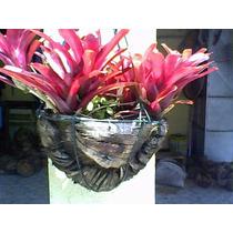 Xaxim De Coco Da Bahia (vaso Pequeno) ``nao Acumula Agua´´