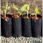 500 Saquinhos De Muda Plantar Semente Saco Mudas Germinação