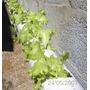 Kit Nutrientes Completo 1000 Litros De Solução Hidroponia Rj