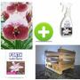 Kit Orquídea Vanda + Substrato + Adubo + Cachepô