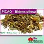Chá De Picão Para Infecções Urinária E Vaginal - 206*
