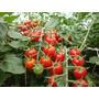 Kit Completo Nutrientes Hidropônicos Para Tomates 3 Fases