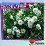 Chá De Jasmim Reduzir As Rugas E Linhas De Expressão - 153*