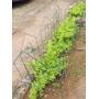 Cerca P/ Jardim (grade Proteção) (altura 85cm) Kit C/ 05 Pçs
