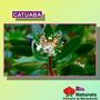 Chá De Catuaba É Um Estimulante Sexual Natural - 62*