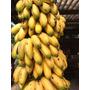Mudas De Banana Ouro - Bulbo