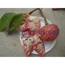 Muda Frutífera De Pinha Rosa - Rara E Deliciosa Fruta