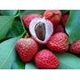 Belas Mudas De Lichia Enxertadas, Deliciosas Frutas