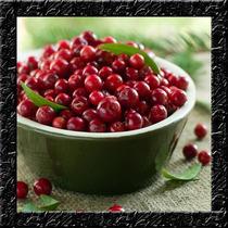 Cranberry Vaccinium Macrocarpon Sementes Para Mudas